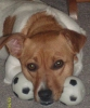 Kemmer Feist, about 8 in dog years, blond and white
