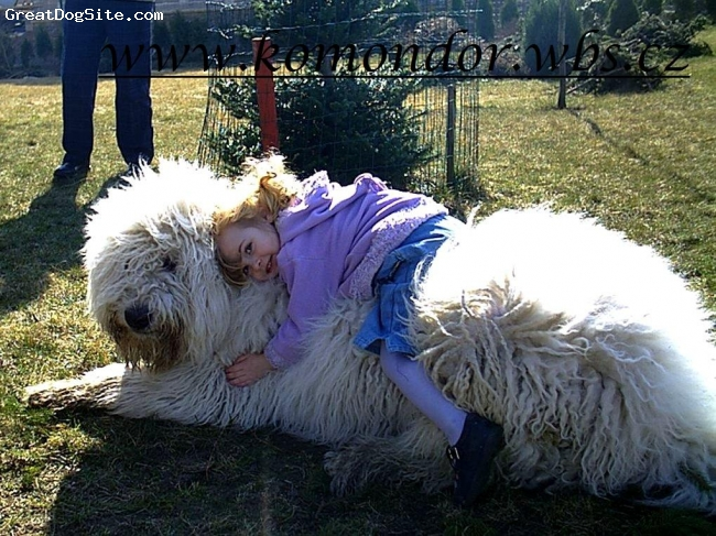 Komondor, 1 year, white, Attila lives in Lithuania, his mother is our Vatta, father was world winner Poznan 2006 Achill Varpus
