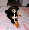 Labloodhound, 3, multi