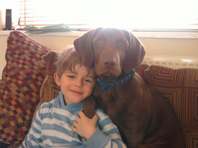 Labmaraner, 5 months, brown, he's such a loving dog. follows me every where.  perect to train. fab with my son. just adorable