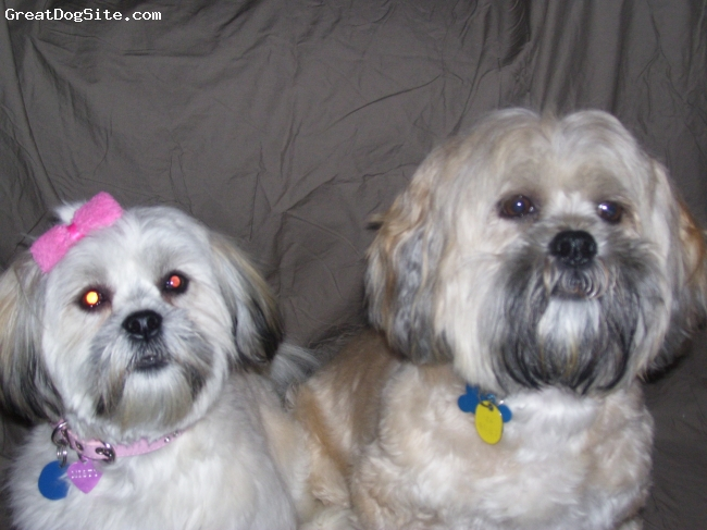 Lhasa Apso, 5 years and 1 year, Blonde, My beautiful babies who bring me joy and happiness every day.