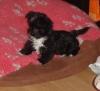 Malchi, 3 months, black&white