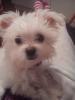 Malchi, 5 months, white