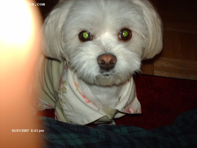 Maltese, 3 years old, white, this is my cute puppy bori shes a female.