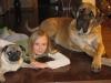 Mastiff, 1 yr., Fawn