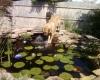 Mastiff, 3, fawn