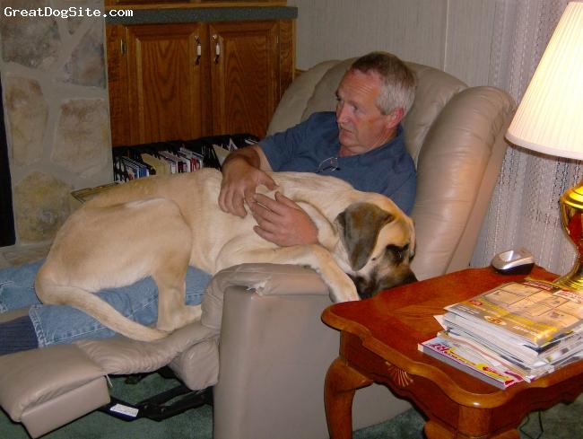 Mastiff, 2 1/2 yrs, Fawn, Naptime!