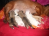 Mauxie, a few hours after birth, 2 White,2 Brown,1 light Brown
