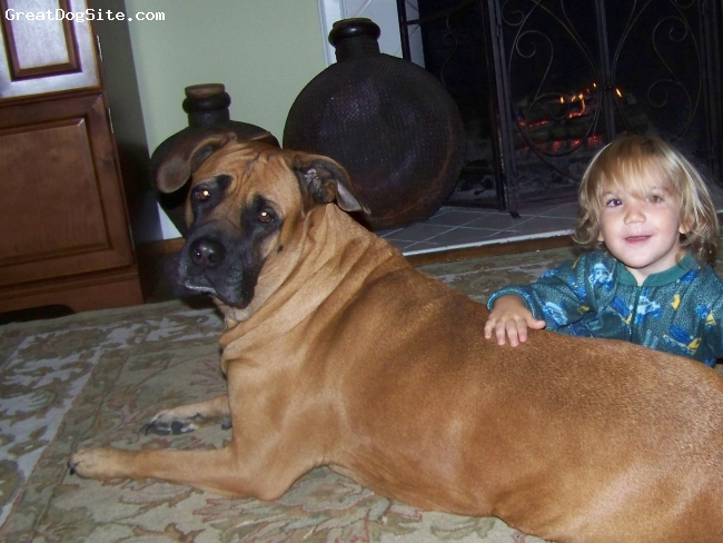 "Nebolish Mastiff, 7, fawn, black mask, Zazu loves babies and kids and will even allow them to ""ride her."""