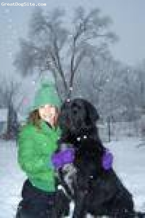 Newfoundland, 1 year, Black, Ginger and my daughter Chelsea playing in the snow. in our back yard in Illinois.