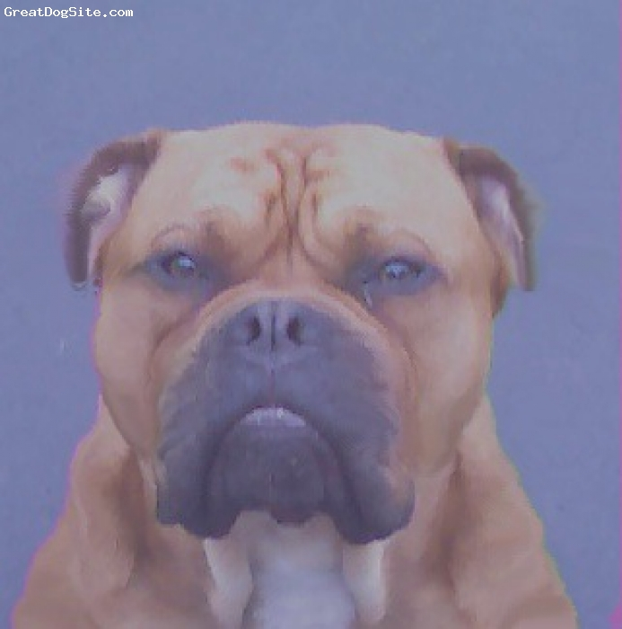 Olde Bulldog, 1, red, mugshot