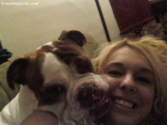 Olde English Bulldogge, 1, white/brindle, Male olde english bulldogge