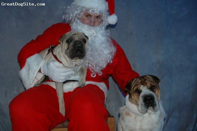Ori Pei, 3 yrs, flowered and fawn, Sage on lap and Gunnar telling Santa their Christmas list.