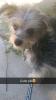 Papi-Poo, 5 months, Black, brown, white, gray