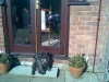 Patterdale Terrier, 10, mainly black