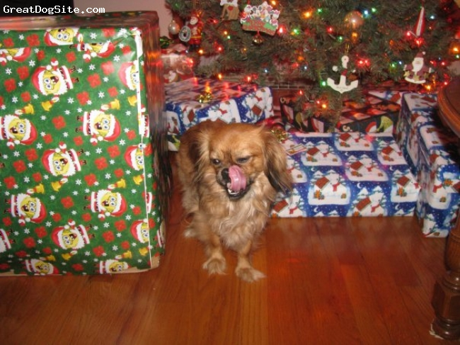 Pekalier, 1 1/2, Sable, Loves Holidays and presents!
