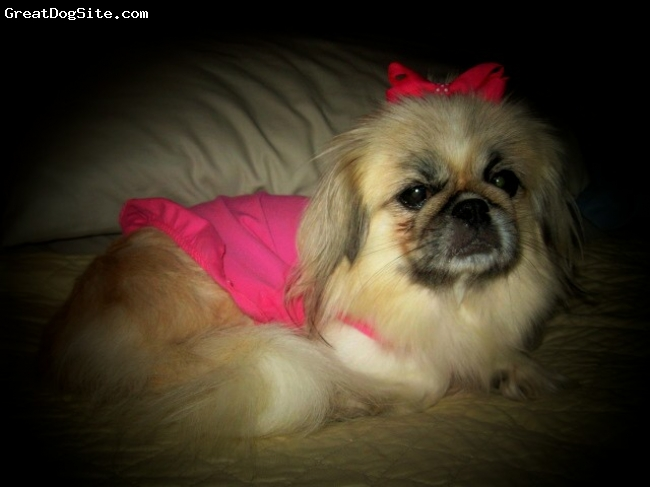 Pekingese, 3, Blonde, She is definetely the pricess of the house!