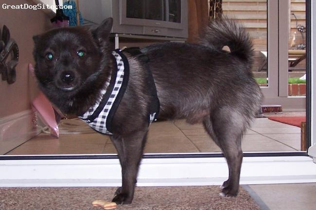 Pomchi, 14 months, Black, A black adult.