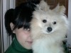 Pomeranian, 7 months, cream