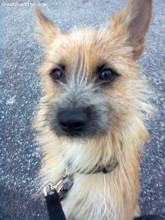 Pomeranian, 7, yellow, Isaiah's dog