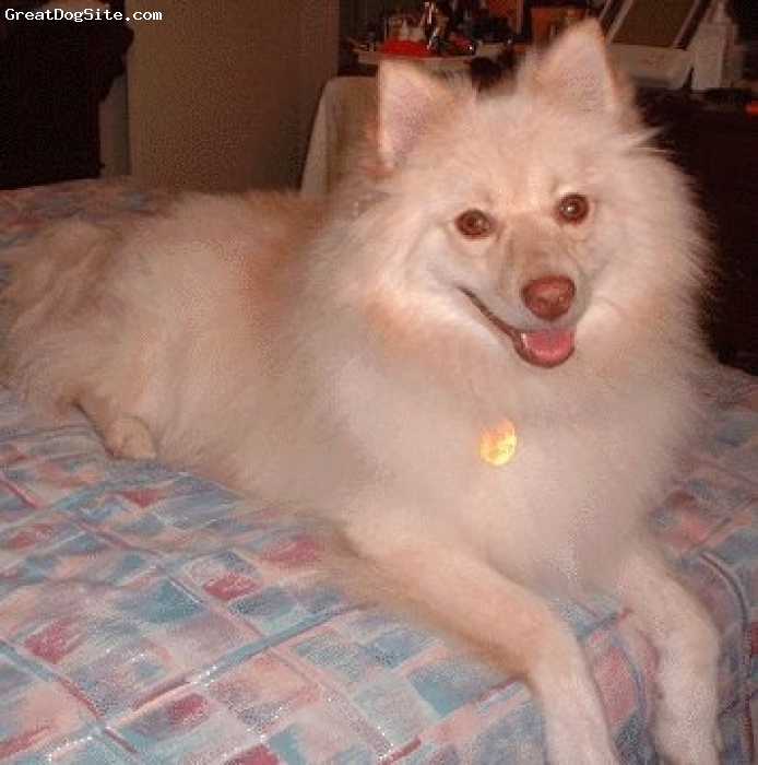 Pomimo, 11, tan, Friendly, beautiful and smiling