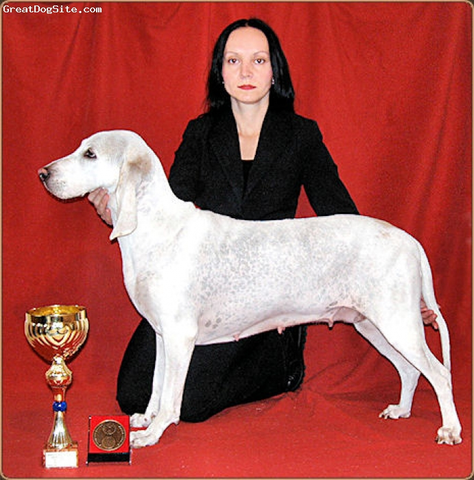 Porcelaine, 9 years, white and orange, International Champion, World Winner