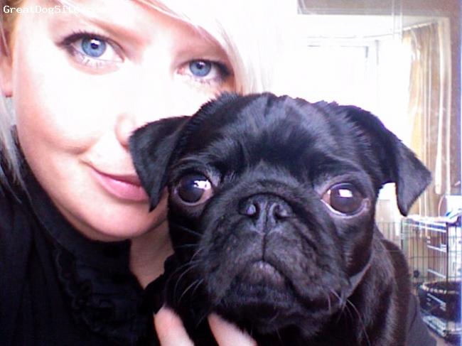 Pug, 10 Months, Black, Best dog ever!!