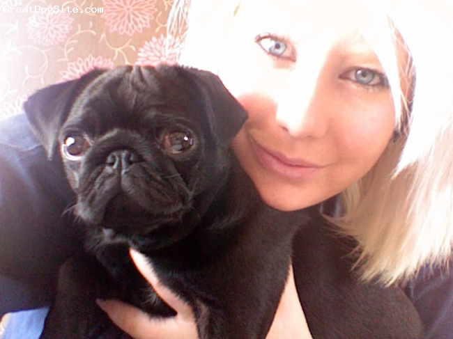 Pug, 10 Months, Black, Posing with mummy!!