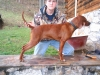 Redbone Coonhound, 2, red and white crest