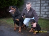 Rottweiler, 13weeks, Black n Tan