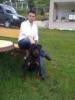 Rottweiler, 1, BLACK