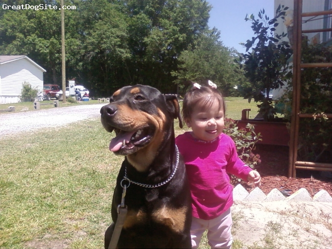 Rottweiler, 4, Black and brown, He is a strong and loving dog