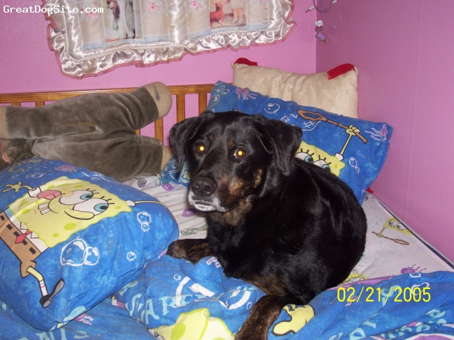 Rottweiler, 9 year, black and brindle, she is my big girl and loves to catch little wild animals a little gross huh.