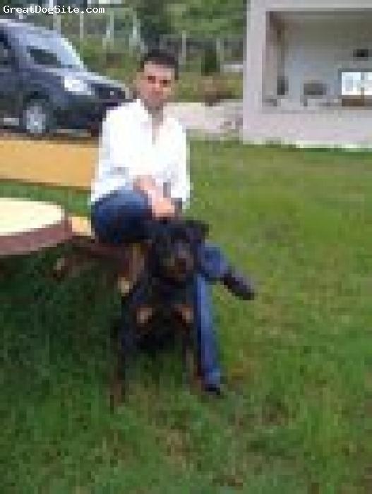 Rottweiler, 1, BLACK, Great ROTT...