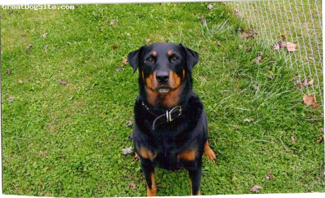 Rottweiler, 8 years, mag/and tan, she was 8 at the time of the picture, she passed away on june 21st 2010 she was 12 years old.