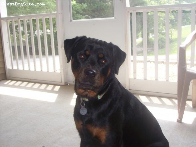 Rottweiler, 2, black/rust, Ellie is just the best dog!!!!