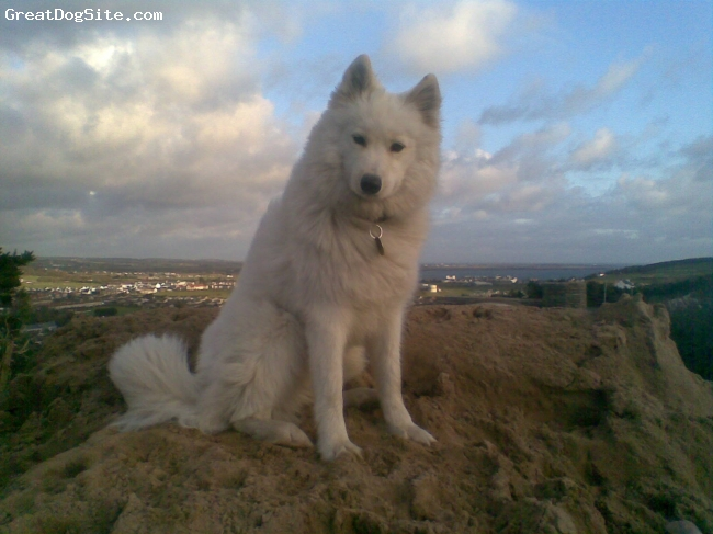 Samoyed, 1, white, she is a very emotive dog, never likes to be alone, loves attention, is a real character :)