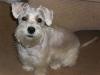Schapso, 14 Months, White