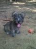 Schapso, 3 Months, Grey
