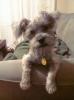 Schapso, 5 months, Grey