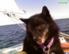 Schipperke, lived to be nearly 18, black