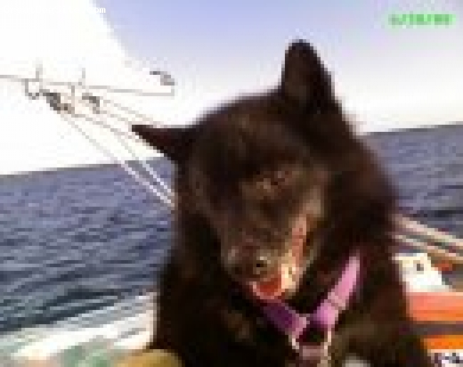 Schipperke, lived to be nearly 18, black, Died on July 1, 2009