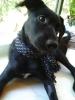 Sheprador, 5 MONTHS, Black