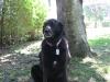 Sheprador, 10, Black
