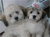 Shichon, Not Specified, white