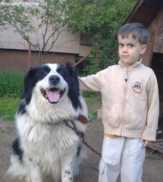 Tornjak, 5 years, Black and White, Best friends