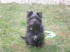 Wauzer, 11 months, Black