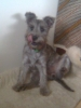 Wauzer, 5 Months, Grey
