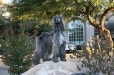 Afghan Hound, 5 years, Gray
