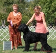 Black Russian Terrier, 4 and half years, black